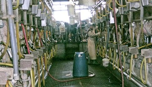 dairy_DSCN4599_CREDIT_Farm_Sanctuary