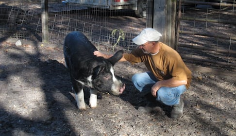 2014_12-03_FS_Comis_Pigs_Adoption_Rooterville_FL_IMG_0415_CREDIT_Farm_Sanctuary