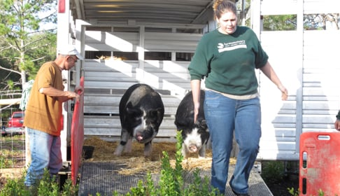 2014_12-03_FS_Comis_Pigs_Adoption_Rooterville_FL_IMG_0392_CREDIT_Farm_Sanctuary