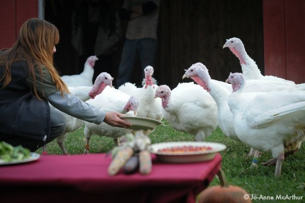 Susie Coston with turkeys at Farm Sanctuary