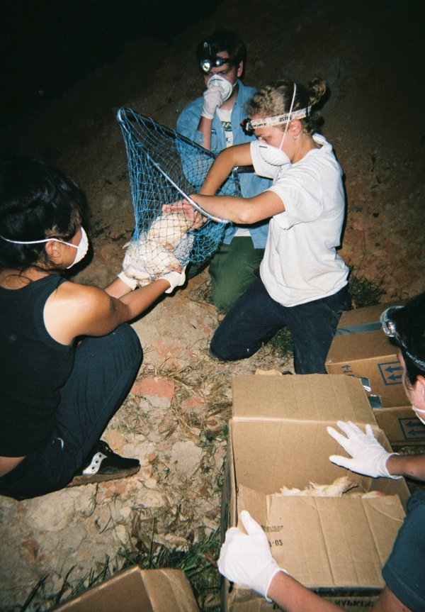 Hurricane Katrina chicken rescue