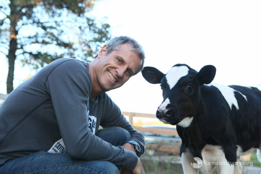 Gene Baur and rescued dairy calf Ari